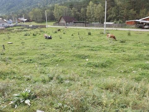 Земельный участок под ИЖС в Горном Алтае - Фото 2