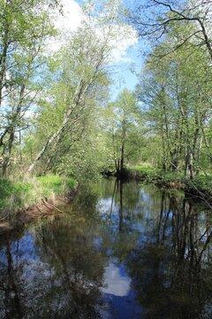 Участок на первой линии реки Черма - Фото 4