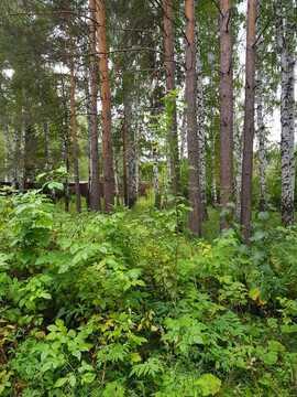 Земельные участки, Зеленый бор (Горный Щит), Рыбоводов, д.14 - Фото 2