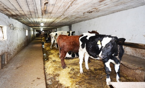 Фермерское хозяйство в Крыму - Фото 3
