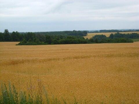 Продам земельный участок сельхоз назначения - Фото 3