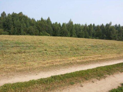 Продам: земля 520 соток, деревня Ростовка - Фото 2