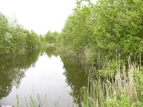 Продам: земля 40 соток, поселок Приисковый - Фото 1