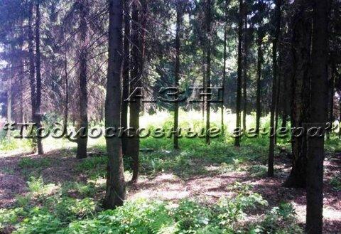 Щелковское ш. 100 км от МКАД, Никифорово, Участок 650 сот. - Фото 2