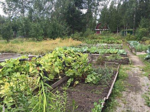 Продается дачка с огородом в СНТ в 15 минутах ходьбы от р. Волга - Фото 4