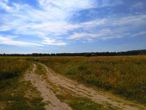 Судогодский р-он, Конюшино д, земля на продажу - Фото 3