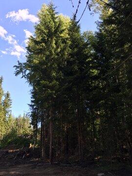 Предлагаем участок 20 соток в ДНП Медное озеро в 18 км от КАД - Фото 5