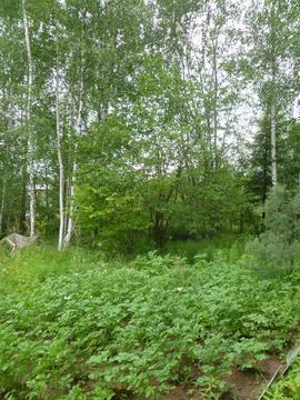 6 соток ст Белые Росы, д. Радкевщина - Фото 2