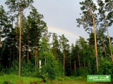 Участок у леса и реки на краю деревни - Фото 4