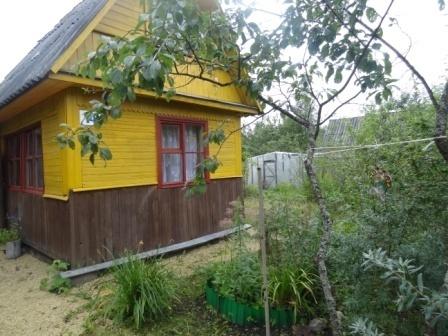 В обжитом, зеленом садоводстве массив Кобрино уютная дача на 6 сотках - Фото 3