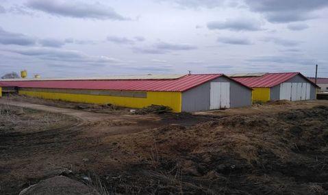 Продажа псн, Борисовка, Новодеревенский район - Фото 3