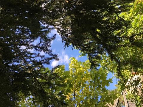 Стародачное место, Николина гора, - Фото 2