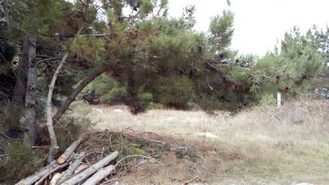Земельный участок с соснами на Фиоленте - Фото 2