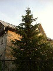 Продажа дома, Каясан, Щучанский район, Ул. Совхозная - Фото 2
