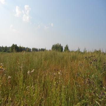Участок 20 соток в д.Меркулово, Клепиковского района, Рязанской области