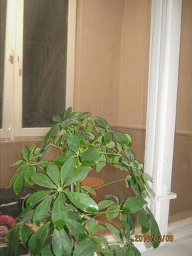 2 комнатная квартира в Тирасполе на Балке - Фото 5