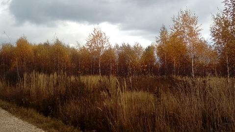 Большое Петровское 8 соток с лесными деревьями, ИЖС. - Фото 2