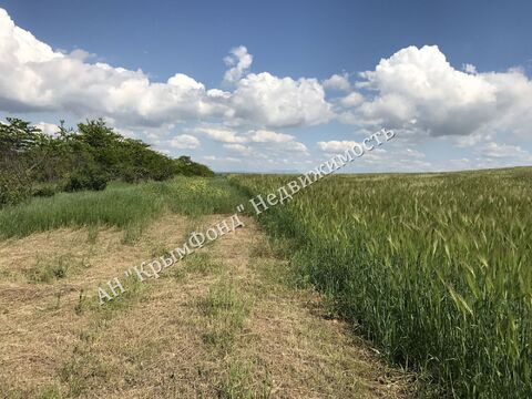 Земельный участок сельхоз назначения, 2,8 Га, с. Вилино - Фото 3