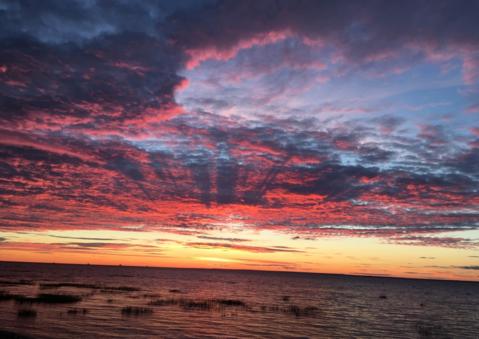 Продается участок у Финского залива,48 соток, дер.Валяницы - Фото 5