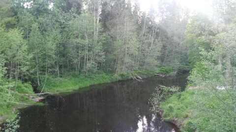 Продам дачу 30 кв.м, сад-во Мшинское - Фото 4
