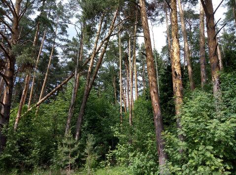 Д. Маслово нп «Блинчиково» участок 24.19 соток ИЖС красивейшего леса. - Фото 1