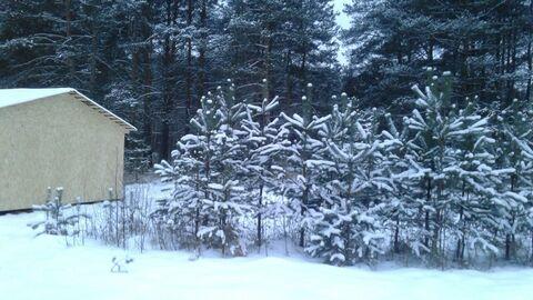 Прекрасный большой участок в большом селе с выходом в лес - Фото 4