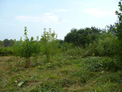 Земельный участок с домиком - Фото 3