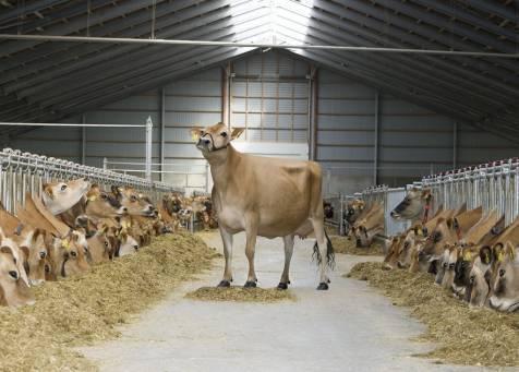 Ферма в Краснодаре - Фото 1