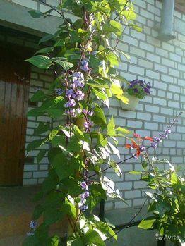 Продажа дома, Аршан, Улица Молодежная - Фото 2