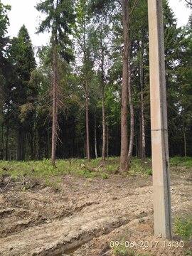 Земельный участок 10 соток по Рогачевскому шоссе, деревня Поповка - Фото 5