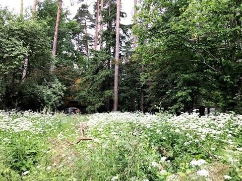 Лесной участок 25 соток на Ярославском шоссе - Фото 1