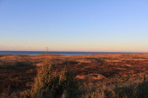 Участок на Чудском озере - Фото 1