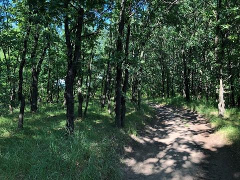 Участок со своим лесом - Фото 2