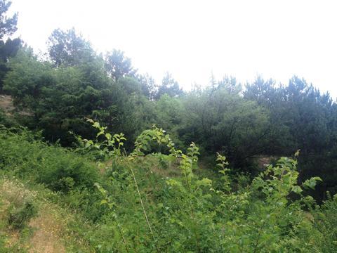 10+10+10 соток в Алупке с панорамным видом, рядом хвойный лес - Фото 4