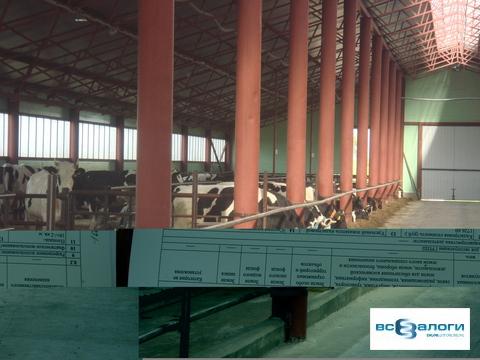 Продажа производственного помещения, Бондарский район, СПК - Фото 4