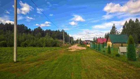 Участок 25 соток в пригороде Пскова, по границе сосновый лес - Фото 1