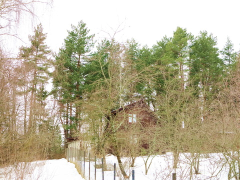 52 сотки у леса, крайний. Звенигород 8 км. к.н. 50:20:0090218:314 - Фото 5