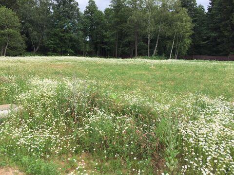 Кп Лесной Пейзаж. Второй от леса земельный участок, напротив озера - Фото 1