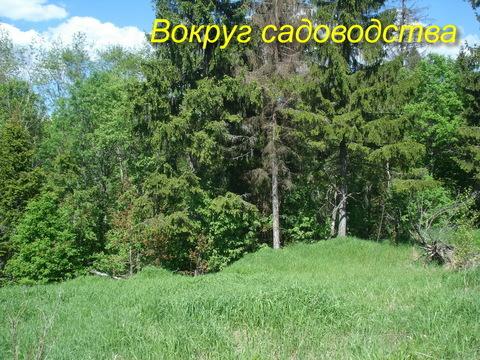 Маленькое и уютное садоводство рядом с Сиверским - Фото 5