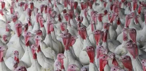 Продам птицефабрику Индейка тер 1 га в городе Михайловске - Фото 3