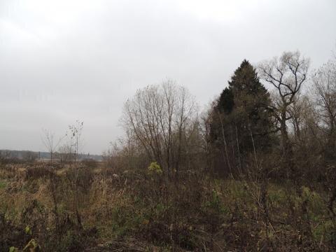 Продается участок 57 соток в поселке Черкизово, Пушкинского района - Фото 2
