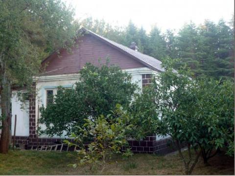 Абхазия. Пицунда. Одноэтажный кирпичный дом - 60 кв.м. + гостевой. - Фото 4
