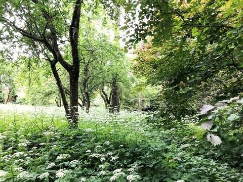 Лесной участок 25 соток на Ярославском шоссе - Фото 5
