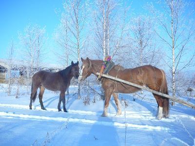 Дома на Новый год. Баня. Лошади. - Фото 2
