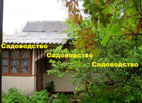 Дача вокруг леса с прудом для купания р-н Красная Пресня - Фото 2