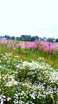 Продается земельный участок 10 соток ИЖС дешево в красивом месте - Фото 4
