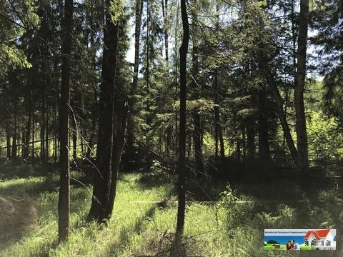 Продаю лесной участок в Московской области - Фото 1