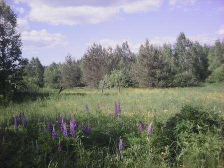 Ст. Запутная Казанского напр, 10 мин пешком, участок СНТ - Фото 5