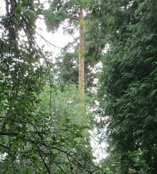 17 соток хвойного леса для постоянного проживания . Закрытый поселок в - Фото 1