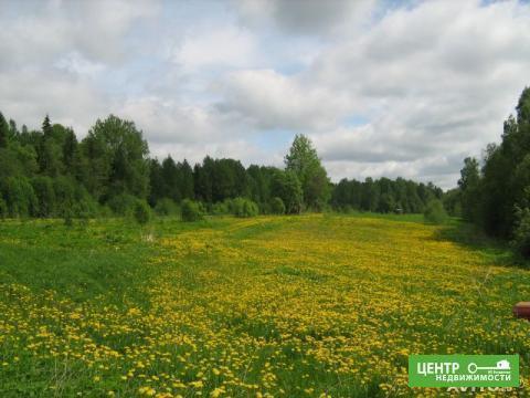 Участок у леса и реки на краю деревни - Фото 2